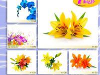 c_200_150_16777215_00_images_Bigprint_46.jpg