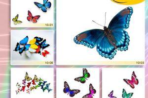 c_300_200_16777215_00_images_Bigprint_38.jpg