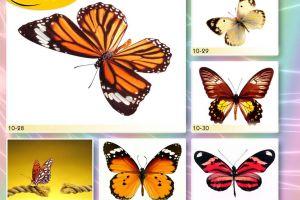 c_300_200_16777215_00_images_Bigprint_41.jpg