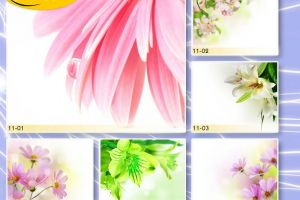 c_300_200_16777215_00_images_Bigprint_43.jpg