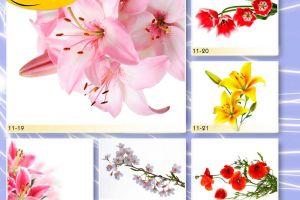 c_300_200_16777215_00_images_Bigprint_45.jpg