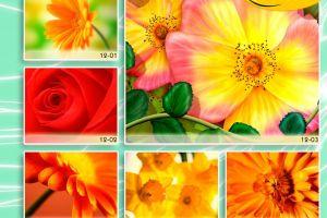 c_300_200_16777215_00_images_Bigprint_50.jpg