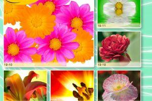 c_300_200_16777215_00_images_Bigprint_51.jpg