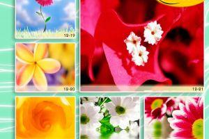 c_300_200_16777215_00_images_Bigprint_52.jpg