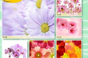 c_300_200_16777215_00_images_Bigprint_53.jpg