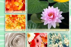 c_300_200_16777215_00_images_Bigprint_54.jpg