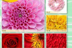 c_300_200_16777215_00_images_Bigprint_55.jpg