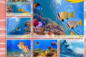 c_300_200_16777215_00_images_Bigprint_70.jpg