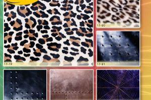c_300_200_16777215_00_images_Bigprint_75.jpg