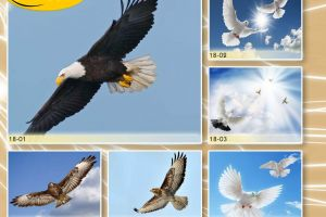 c_300_200_16777215_00_images_Bigprint_77(1).jpg