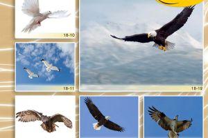 c_300_200_16777215_00_images_Bigprint_78(1).jpg